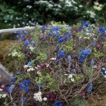RHS-Chelsea-Flower-Show-2016-The-Garden-Bed-Asda-Florist-Alison-Doxey-Stephen-Welch-Artisan-Garden-Flowerona-Feature