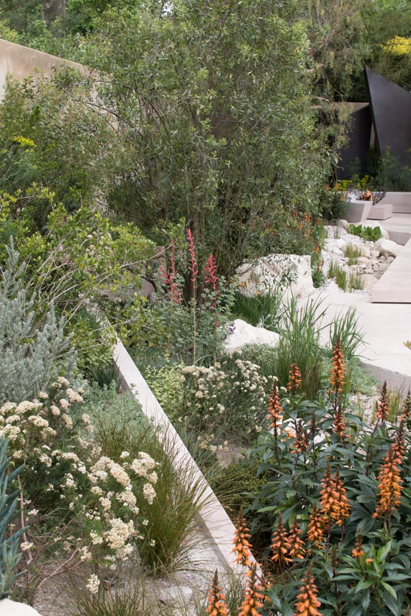 RHS Chelsea Flower Show 2016 The Telegraph Garden Andy Sturgeon Best Show Garden Flowerona-13