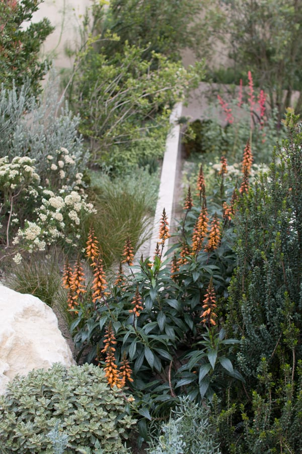 RHS Chelsea Flower Show 2016 The Telegraph Garden Andy Sturgeon Best Show Garden Flowerona-9