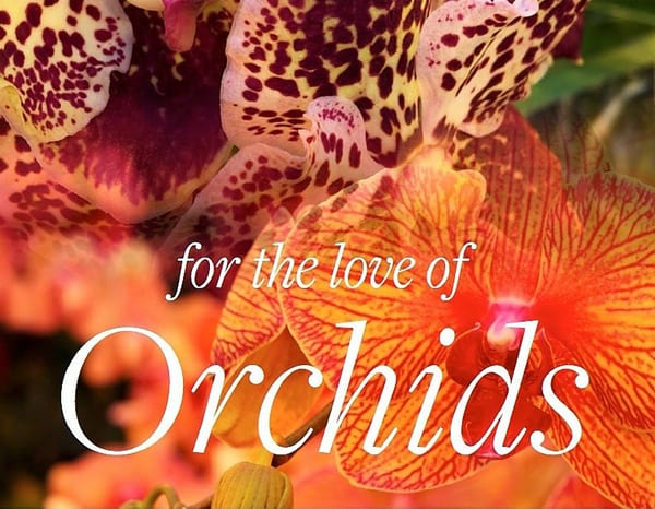 for+the+love+of+Orchids+Neill+Strain+May