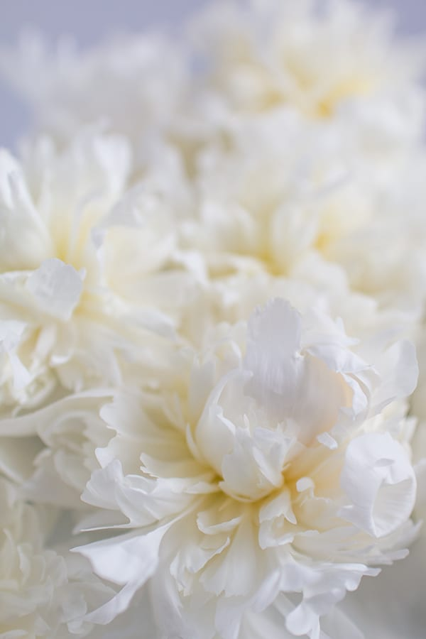 Duchesse-de-Nemours-Peony-Flowerona-6