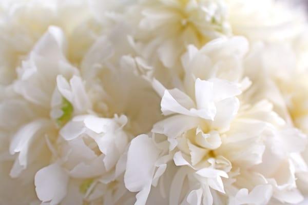 Duchesse-de-Nemours-Peony-Flowerona-7