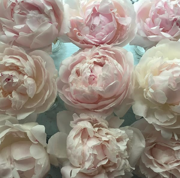 Fairy-Nuff-Flowers