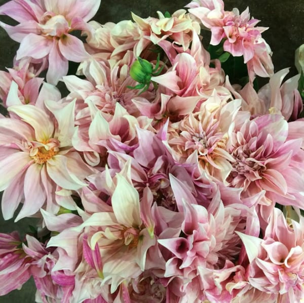 Rowan-Blossom