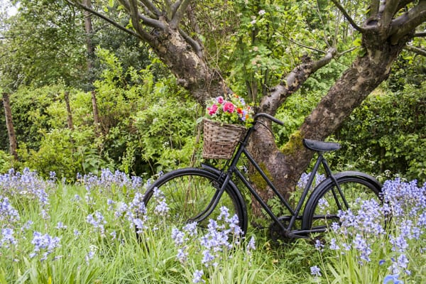 The-Flower-Patch-bike-shot-600