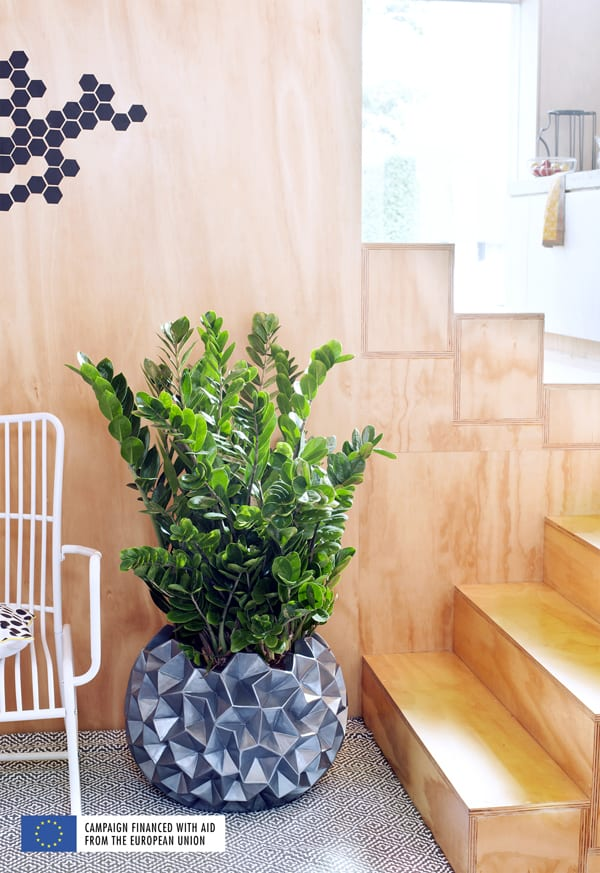 Zamioculcas-Houseplant-of-the-Month-June-2016-Flowerona-3