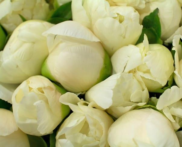 Flowerona Tips : 10 Florists to follow on Snapchat