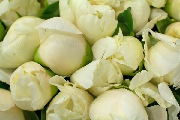 peonies-flowerona-1