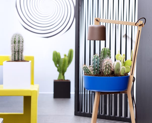 Houseplant of the Month – Cactus