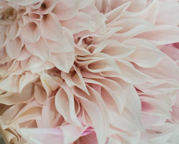 Cafe-au-Lait-Dahlias-Zest-Flowers-New-Covent-Garden-Flower-Market-Flowerona-Feature