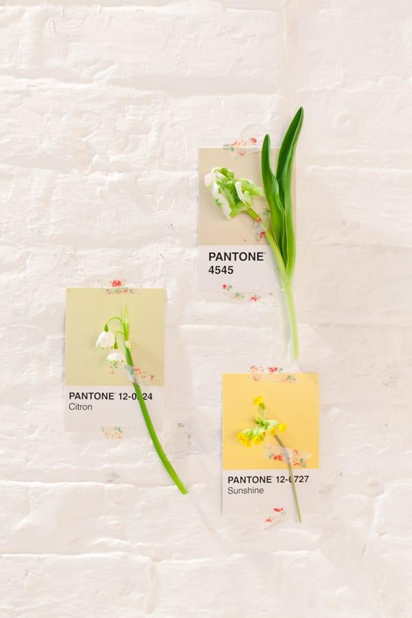 Flowerona---Branding-for-Florists-Pantone