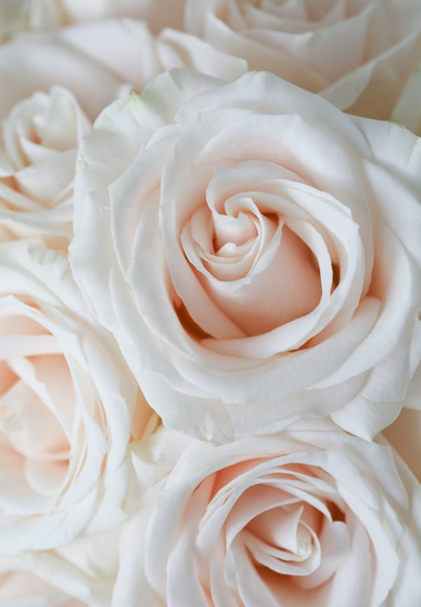 Marks & Spencer Beautiful Bloom Flowerona-1