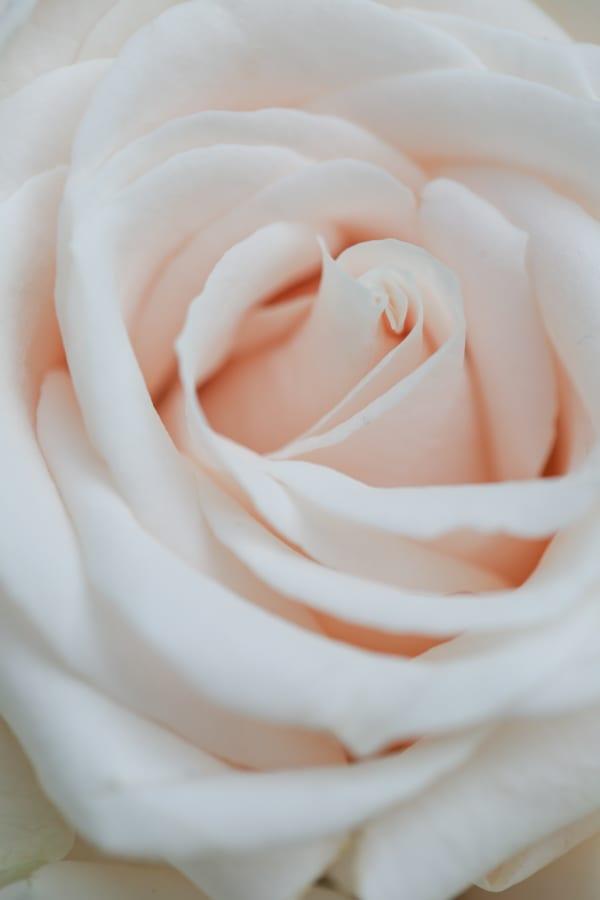 Marks & Spencer Beautiful Bloom Flowerona-7