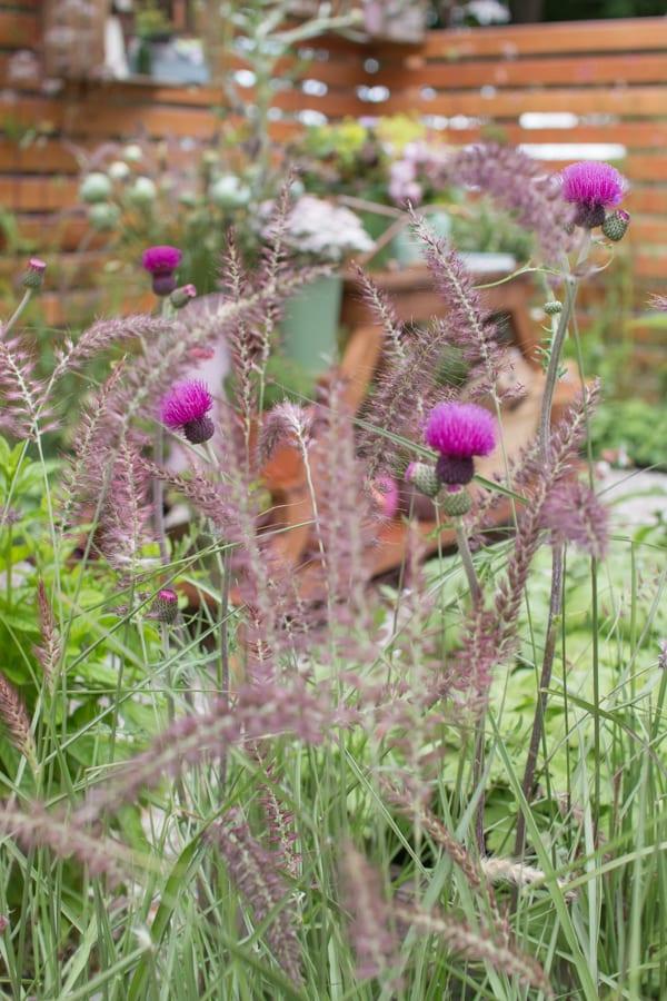 RHS Hampton Court Palace Flower Show 2016 Katie's Garden Katie's Lymphoedema Fund Flowerona 1-16