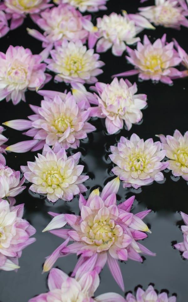 RHS Hampton Court Palace Flower Show 2016 Katie's Garden Katie's Lymphoedema Fund Flowerona 1-9