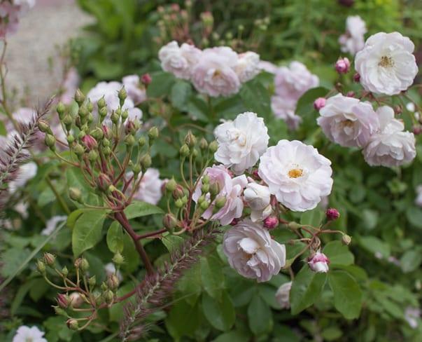 RHS Hampton Court Palace Flower Show 2016 | Katie's Garden