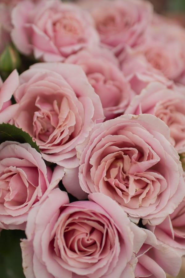 The Real Flower Company RHS Hampton Court Palace Flower Show 2016 Flowerona-7