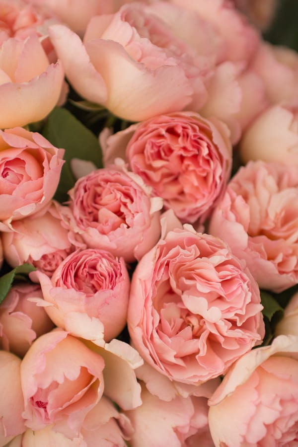 The Real Flower Company RHS Hampton Court Palace Flower Show 2016 Flowerona-8