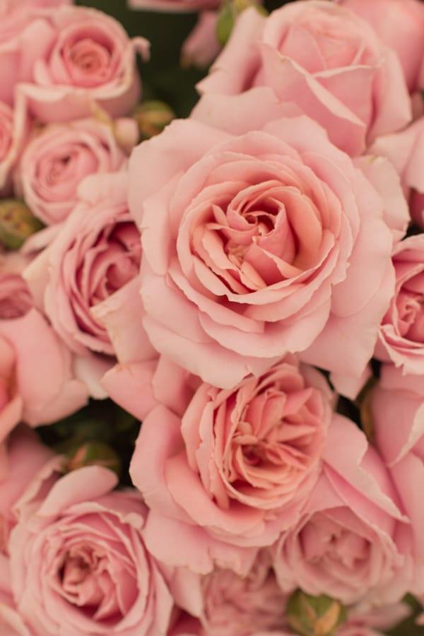 The Real Flower Company RHS Hampton Court Palace Flower Show 2016 Flowerona-9