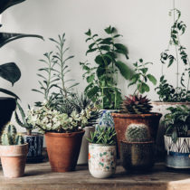 03-another-escape-jeska-hearne-feature-our-oases-plants-feature