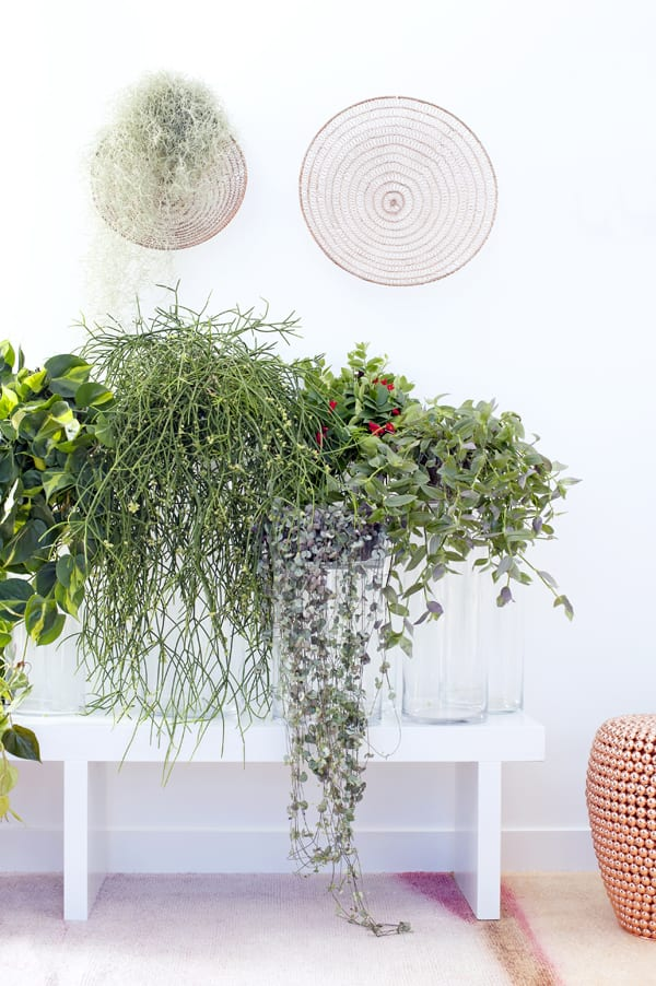 Hanging-Plants-Houseplant-of-the-Month-Flowerona-1