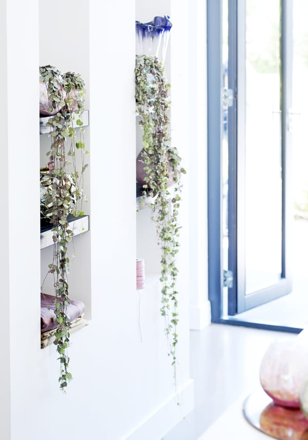 Hanging-Plants-Houseplant-of-the-Month-Flowerona-3