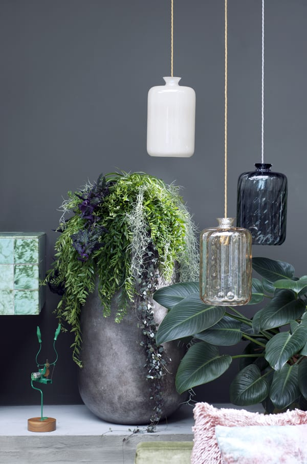 Hanging-Plants-Houseplant-of-the-Month-Flowerona-4