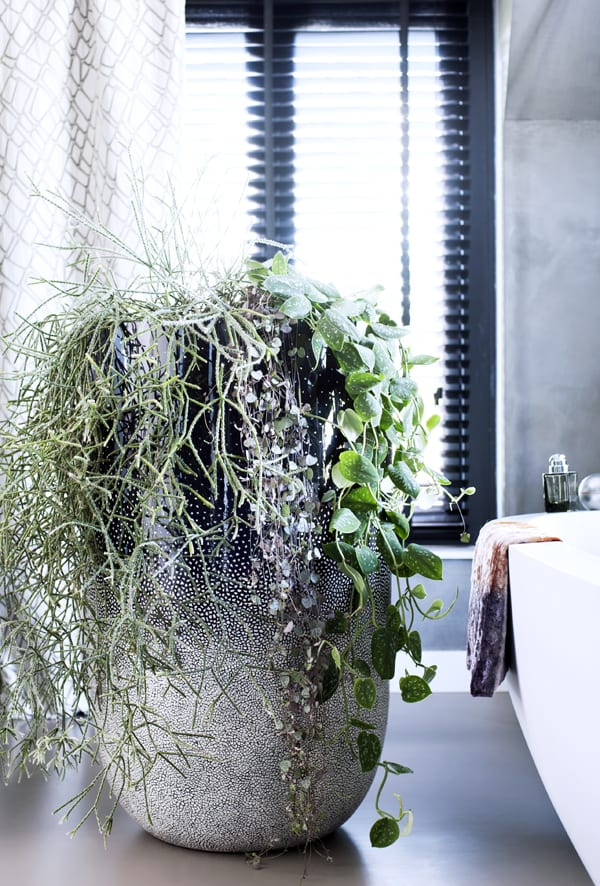 Hanging-Plants-Houseplant-of-the-Month-Flowerona-6
