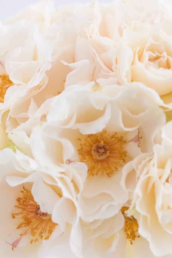 Margaret Merrill Roses Zest Flowers Flowerona 600-1