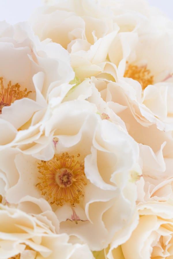 Margaret Merrill Roses Zest Flowers Flowerona 600-2