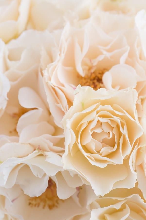Margaret Merrill Roses Zest Flowers Flowerona 600-3