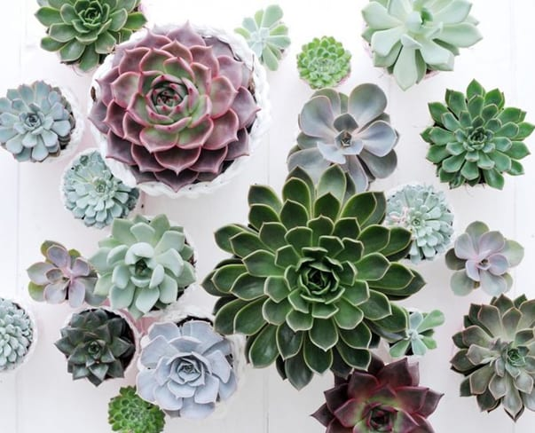 Heading off to university & wondering which houseplants are perfect for students?