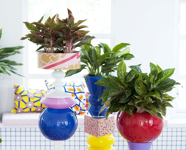 Houseplant of the Month – Chinese Evergreen
