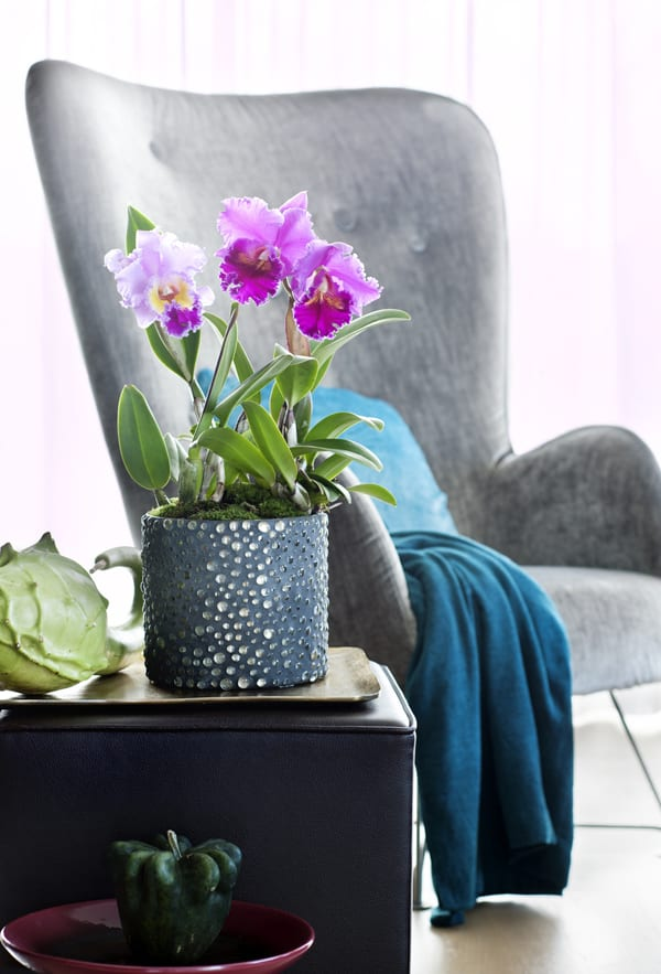 houseplant-of-the-month-speciality-orchids-flowerona-3
