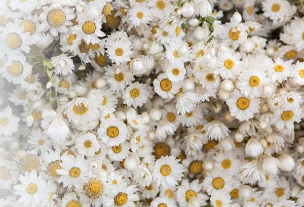 rebecca-louise-law-forevermark-flowerona-4