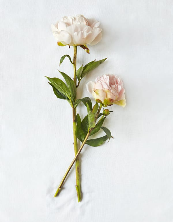 Peony-Discovering-the-Meaning-of-Flowers-Book-by-Shane-Connolly-Flowerona-2