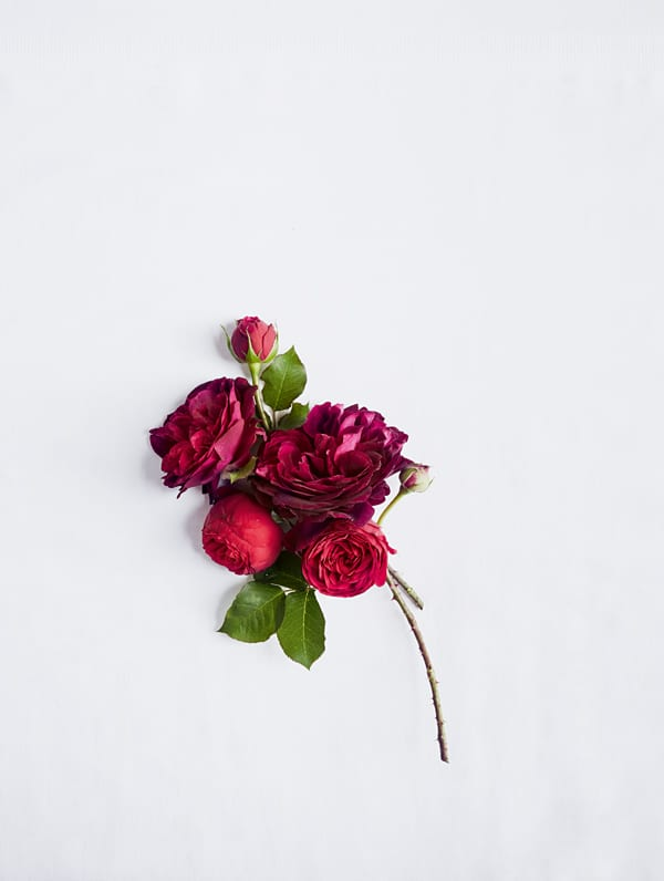 Red-Rose-Discovering-the-Meaning-of-Flowers-Book-by-Shane-Connolly-Flowerona-5