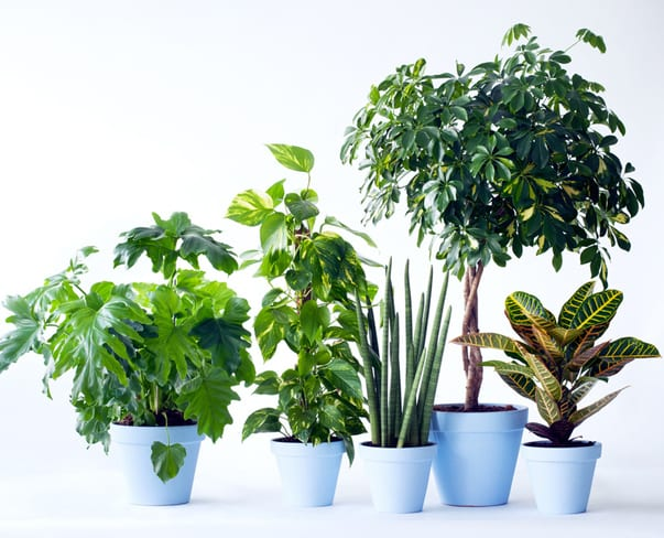Houseplant of the Month – Commitment Free Plants