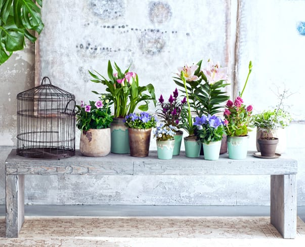 Houseplant of the Month – In & Out Plants