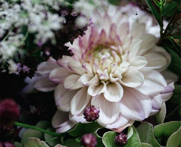 Instagram for Florists Online Course – Survey