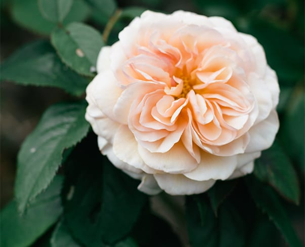 British Flower Grower   Holme Flowers   North Yorkshire