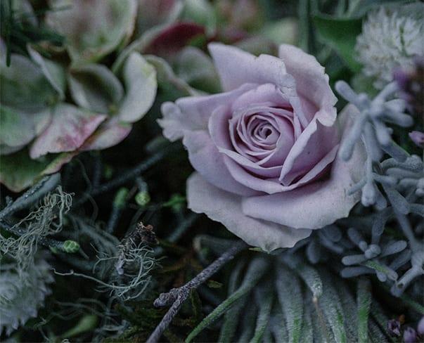 Visiting Zita Elze's Florist Shop in Kew | Christmas 2017 | Part 2