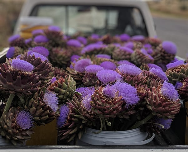 Escape to South Africa on a Botanical Journey with Cape Lily & Passionflower | March 12th – 21st, 2018