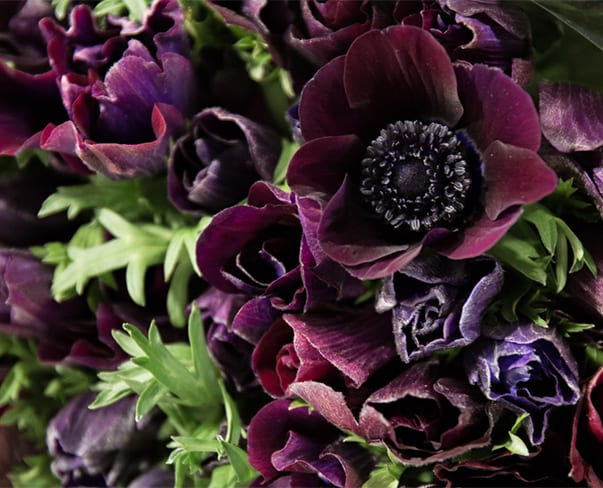 In Season at the Flower Market this January | New Covent Garden Market