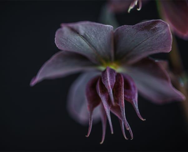 Instagram | The Florist's Favourite Social Media Platform