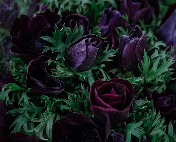 In Season at the Flower Market this March | New Covent Garden Market