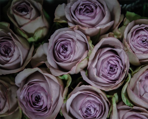In Season at the Flower Market This April | New Covent Garden Flower Market