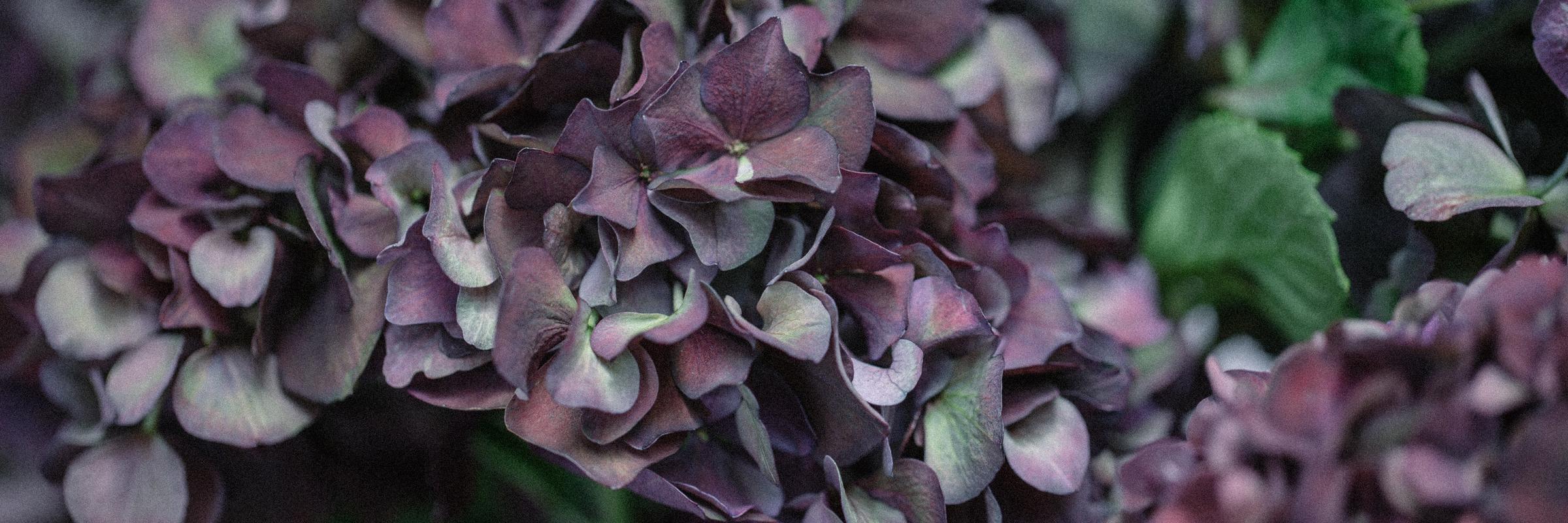 Flowerona Slider 1