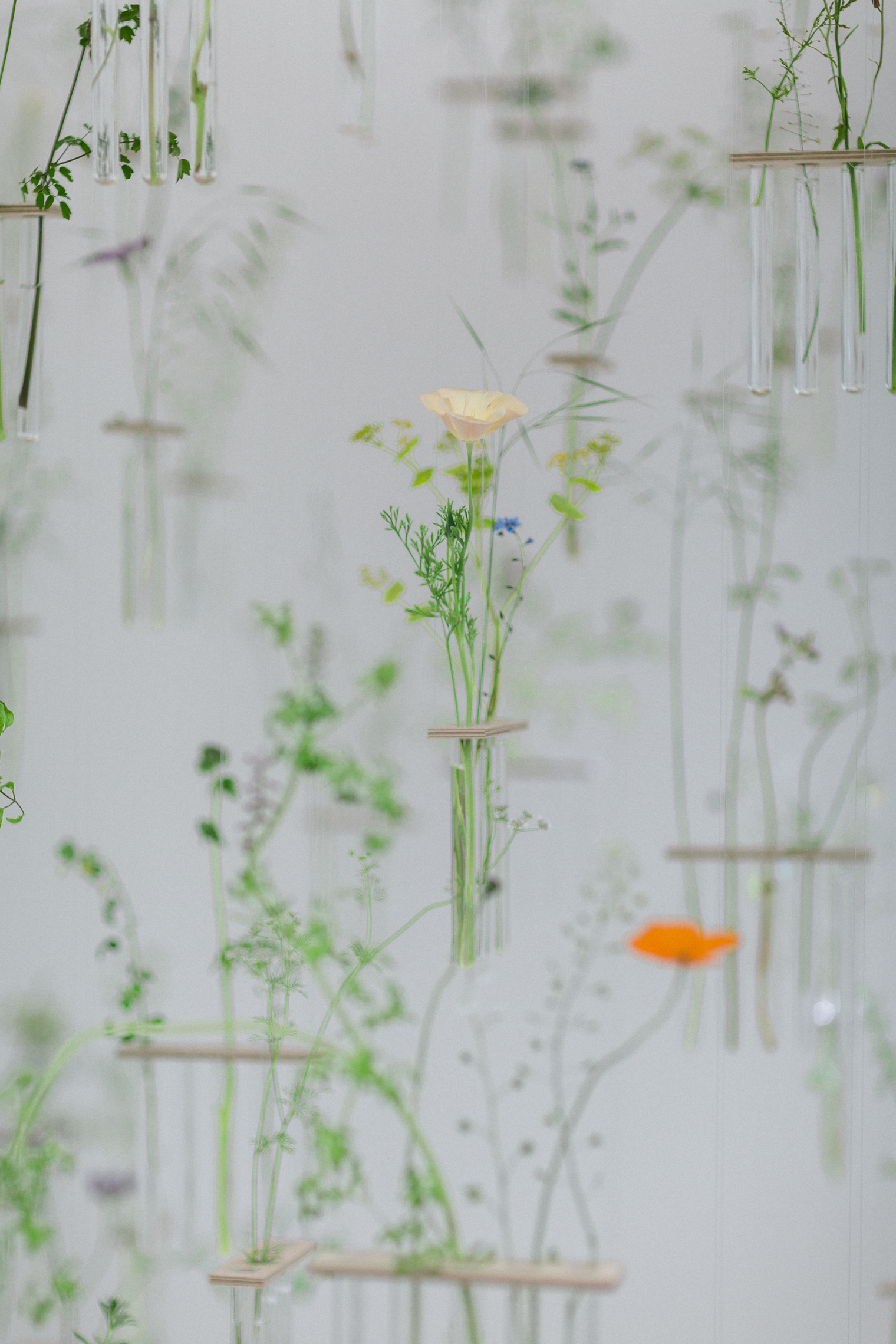 Come What May by Festoon at the RHS Chelsea Flower Show 2019
