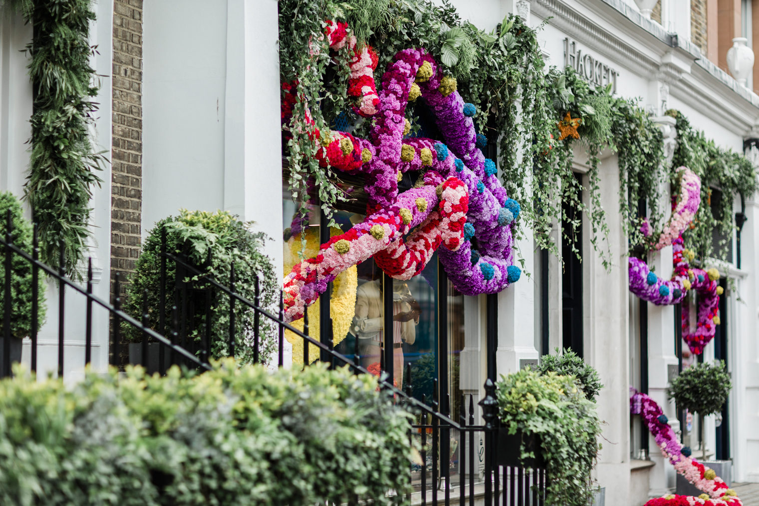 Wildabout for Hackett Chelsea in Bloom